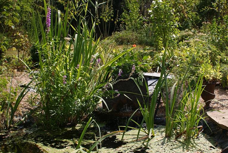 source artificielle jardin amour courtois gîte de charme amboise